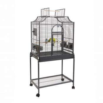 Bird Cage Amazona 1