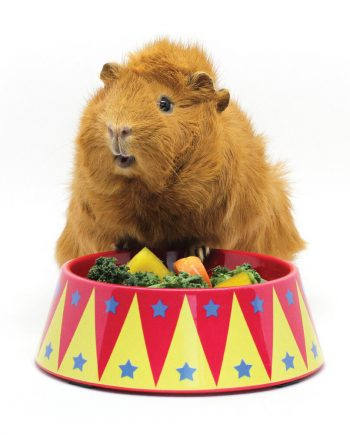 Haypigs Food bowl Trainer Circus